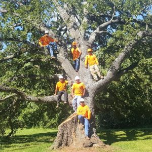 Tree Trimming Leander TX